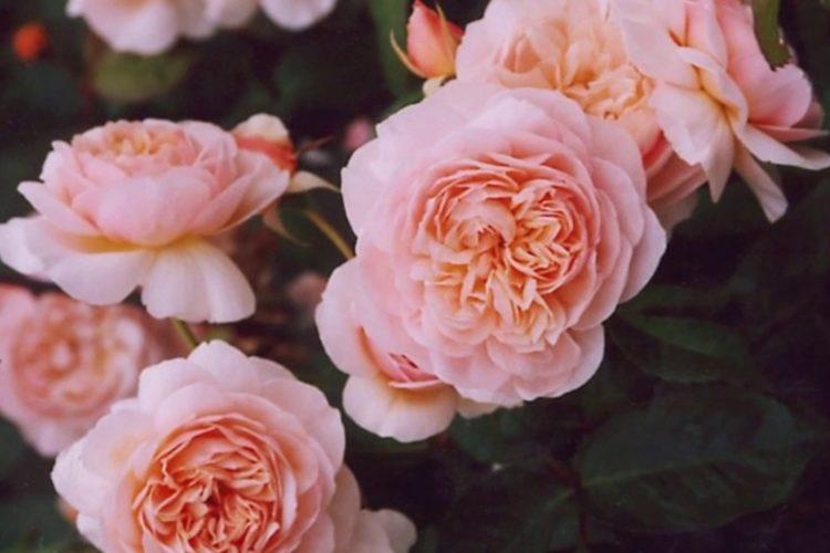 Top 10 cele mai scumpe flori din Lume (Partea I)
