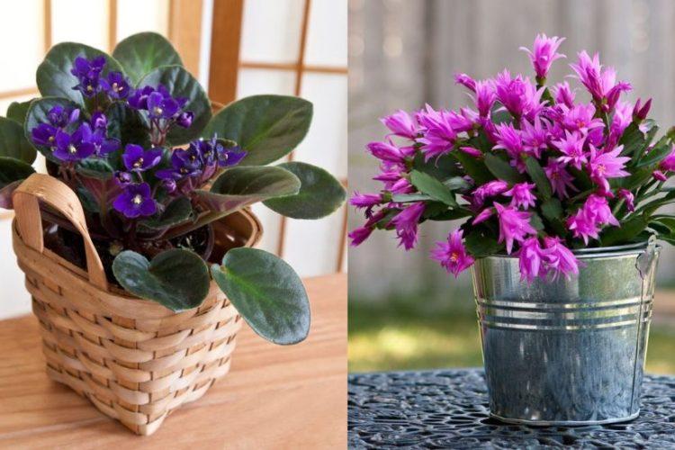 Top 5 cele mai rezistente flori de apartament
