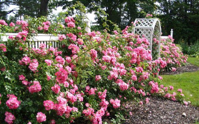 Top 5 Cele mai parfumate flori de grădină