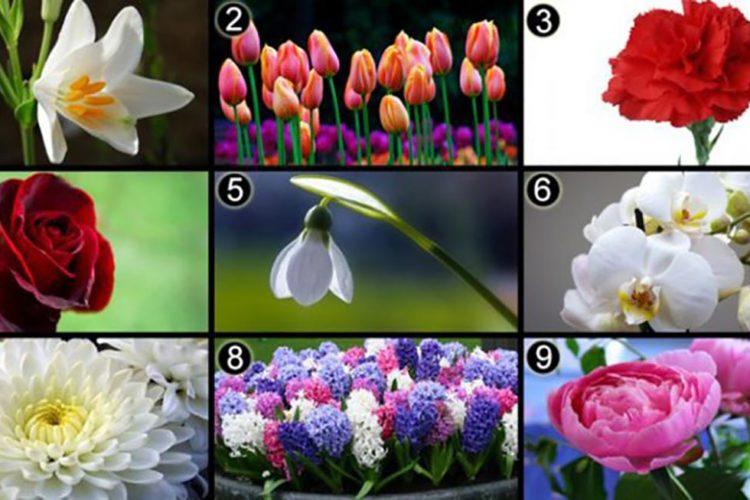 Alegerea florilor după personalitate
